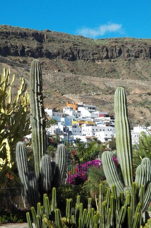 Cordial Mogan Playa: view from the cactus garden