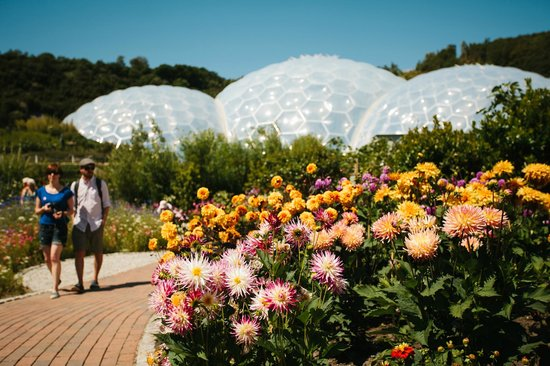Eden Project: Brilliant summer dahlia display in front of the Biomes