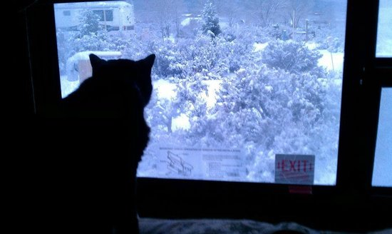 Taos Valley RV Park and Campground: Our cat, Jerry, looking at the new morning snow