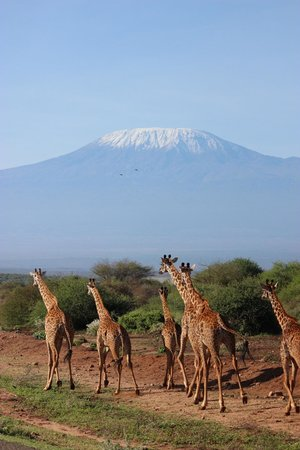 Kennedy Tours and Safaris - Day Tours: Kilimanjaro
