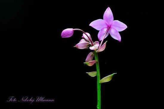 Selva Verde Lodge: Orchid