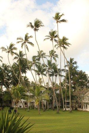 Paradise Road The Villa Bentota : palm trees