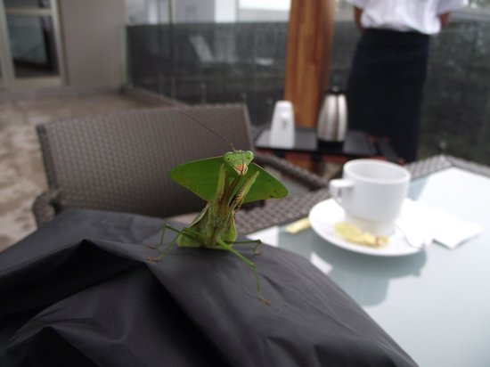 Mashpi Lodge: Praying Mantis Visits