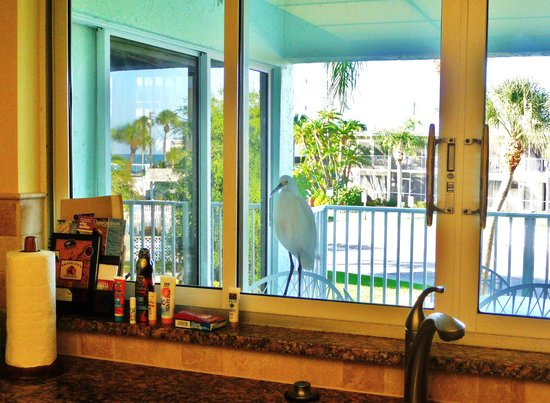 "Calini Beach Club: kitchen ""visitor"""