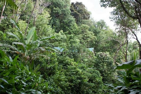 Jungle Bay, Dominica: Die Cottages im Regenwald