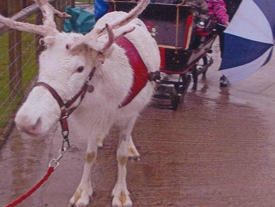 Blithbury Reindeer Lodge: Sleigh ride