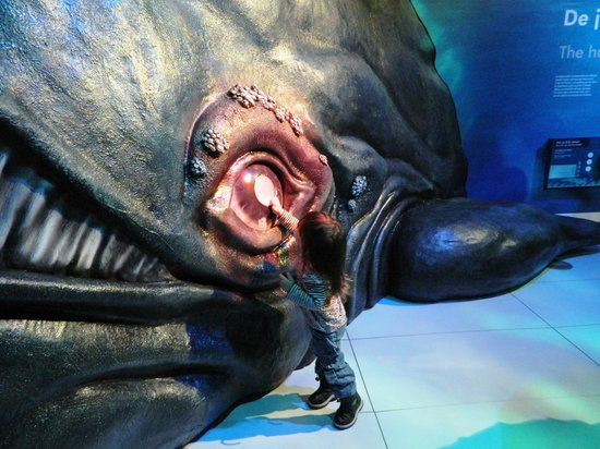 Het Scheepvaartmuseum: עין הדג