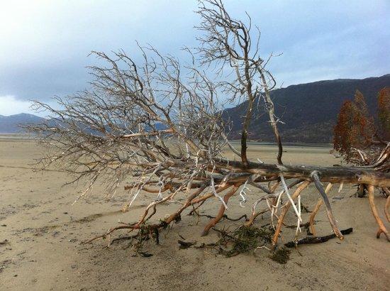 Lyngshestlandet: On the beach near Storslett