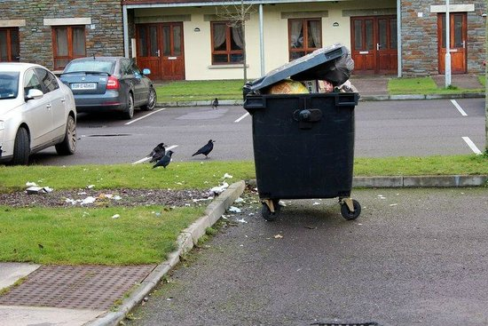 Blarney Hotel & Golf Resort: Overflowing bin in parking lot leading to self-catering units
