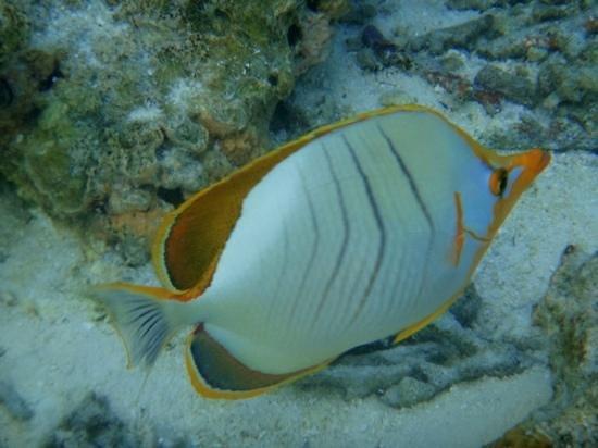 Constance Moofushi: snorkeling