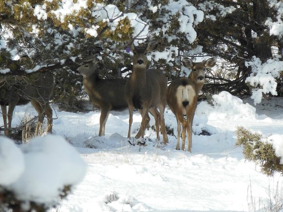 The Lodge at Eagle Crest: Saw these guys under a tree then they took off and ran over one of the fairways. So pretty!