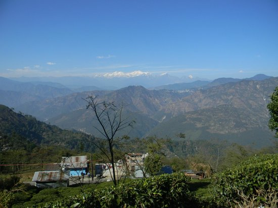 Kanchenjunga Mountain: Mt.Kanchenjunga from Darjeeling Tea Garden