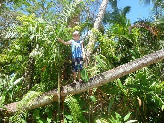 ULTIQA at Fiji Palms Beach Resort : Coconut climb