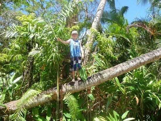 ULTIQA at Fiji Palms Beach Resort: Coconut climb