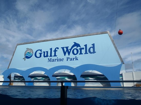 Gulf World Marine Park: Dolphin Area