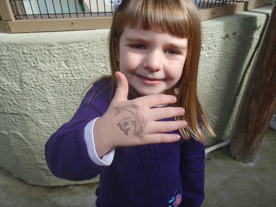 Gulf World Marine Park: She got her Hand Stamped with Dolphins on it