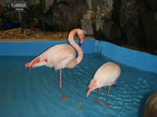 Gulf World Marine Park: Flamingo's