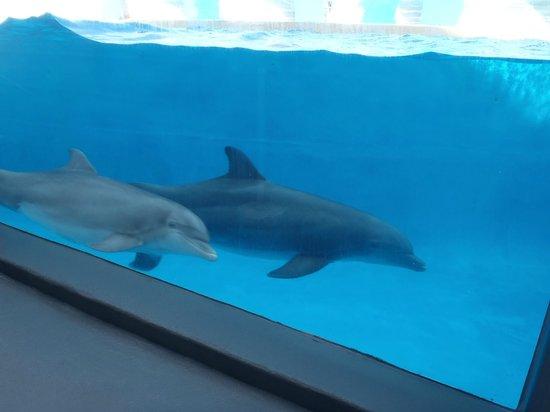 Gulf World Marine Park: Dolphins