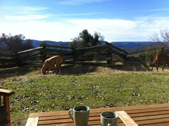 Lyn-Mar Pond Guest Ranch: Breakfast with a view!