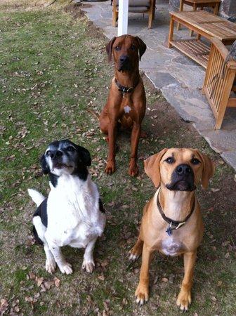 Lyn-Mar Pond Guest Ranch: My boys & Snert