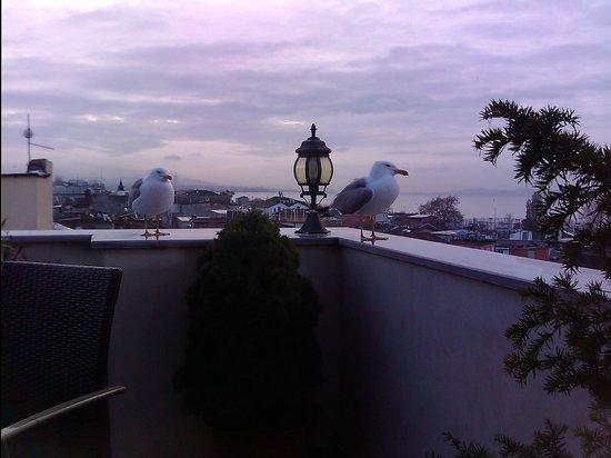 Amber Hotel: vu de la terrasse