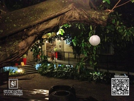 Studio Hotel: Higueron tree