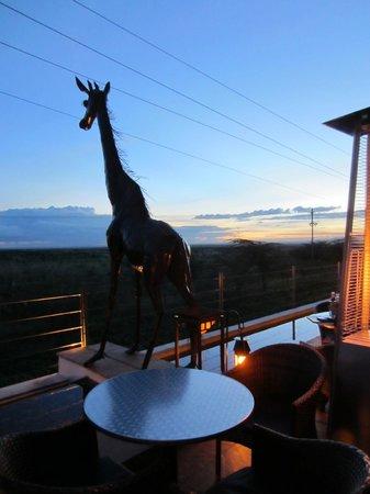 Ole Sereni: The giraff at the resto