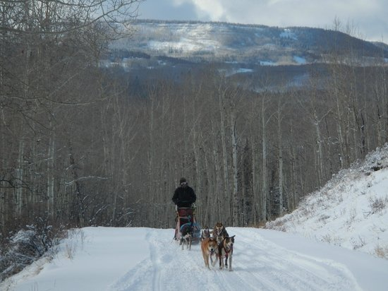 Snow Buddy Dog Sled Tours: Dog Sled amongst the Aspens on scenic Dunckley Pass!