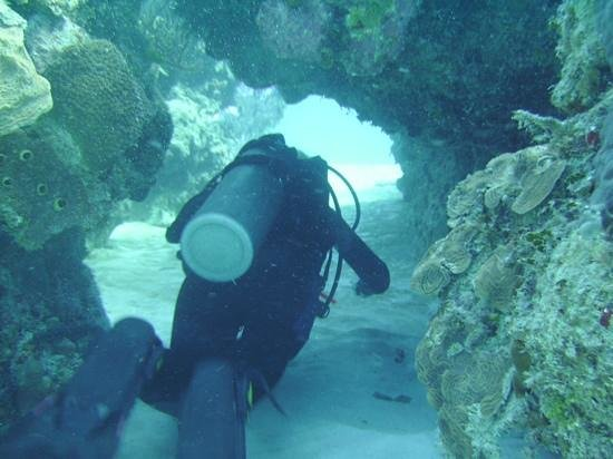 Reef Divers Cayman Islands: tons of swim throughs, so fun!