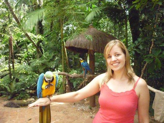 Parque das Aves: Arara