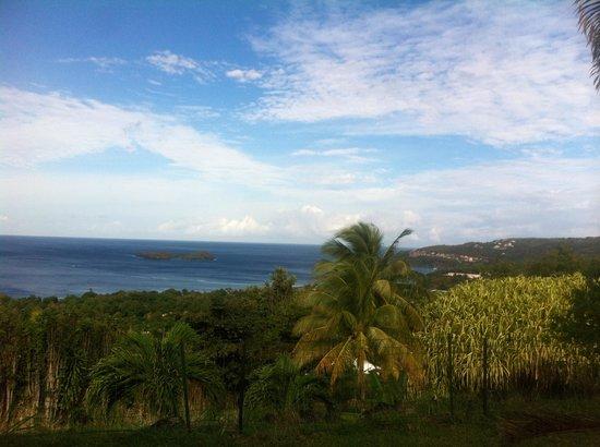 Vue de notre bungalow bild von le jardin tropical for Jardin tropical guadeloupe