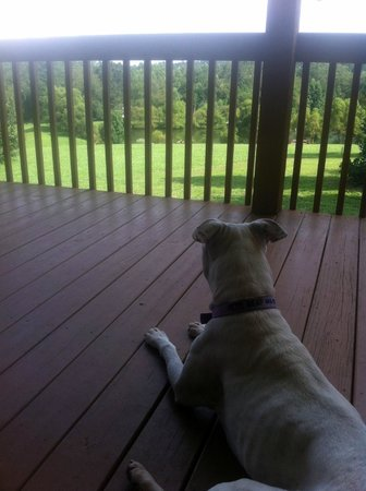 Barkwells, The Dog Lovers' Vacation Retreat: enjoying the scenery.