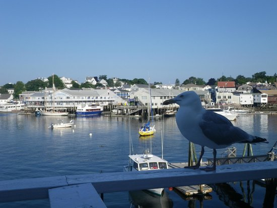 Boothbay Harbor Inn: note the friendly seagull!