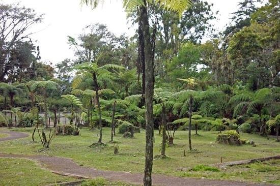 The tree fern collection picture of jardin botanico for Jardin lankester
