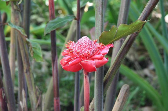 Tet Paul Nature Trail: beautiful flowers and plants all along the way