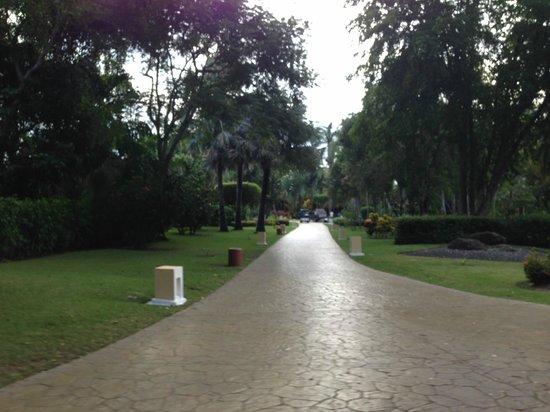 Bavaro Princess All Suites Resort, Spa & Casino: Beautiful vegetation!