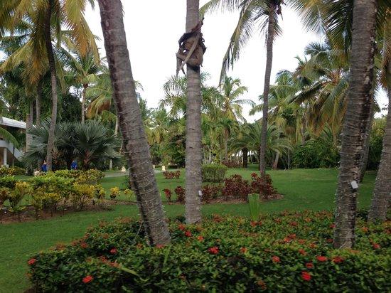 Bavaro Princess All Suites Resort, Spa & Casino: Nice garden!