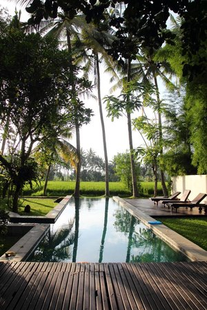 Bali T House: Swimming pool