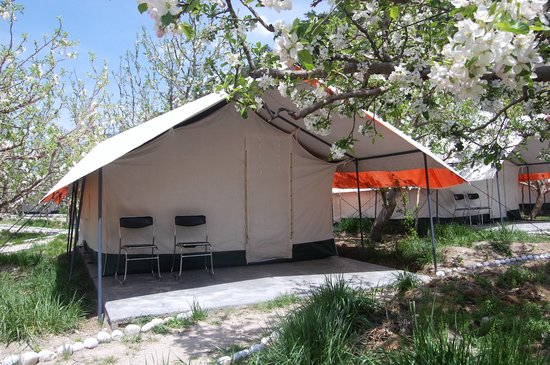 Apple Orchard Farm and Camping :                   i accept the terms & conditions