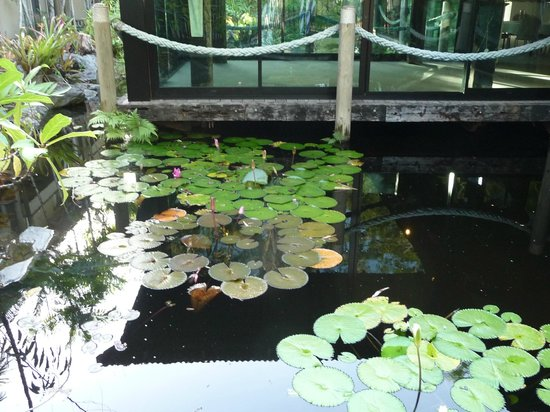 Ramada Resort Port Douglas: Another lily pond