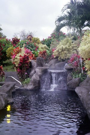 Arenal Kioro: Beautiful tropical gardens