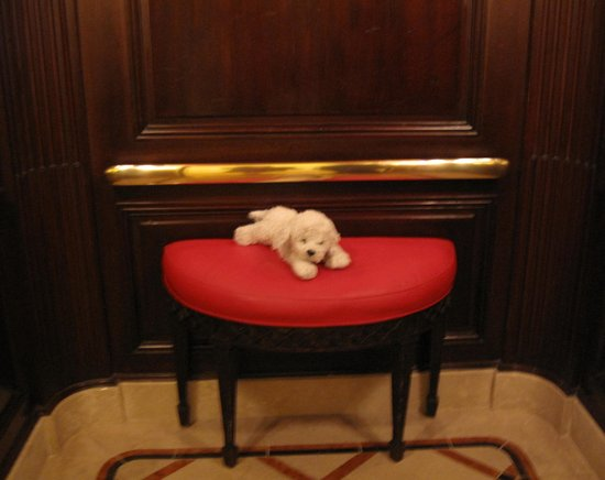 Beverly Wilshire Beverly Hills (A Four Seasons Hotel): in the elevator...