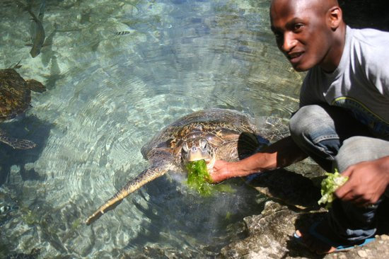Essque Zalu Zanzibar: 2 Turtles Centers are located beside the hotel