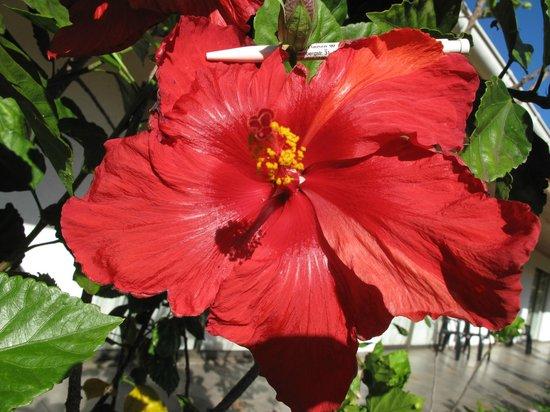 Hotel Puku Vai: meine Liebe, seine Hibisken