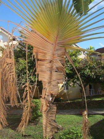 Residence Plage des Salines: vue de la salle : arbre du voyageur en piteux état !