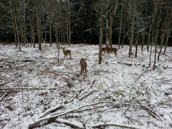 Villa Roma Resort and Conference Center: One of several groups of deer you see when you go horseback riding.