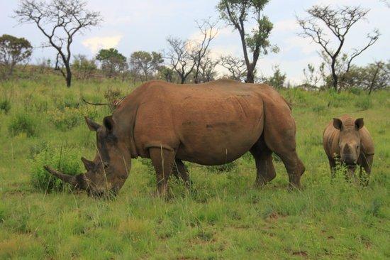 Kololo Game Reserve: Wild Life