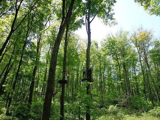 Treetop Trekking: wooo - all on top