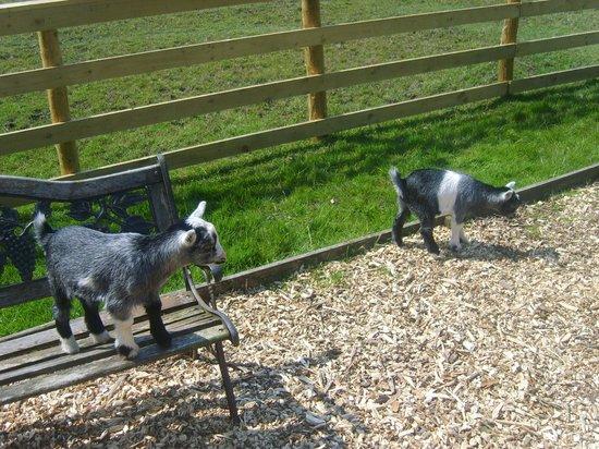 Animals roaming freely foto di ducky 39 s park farm for Roaming inghilterra