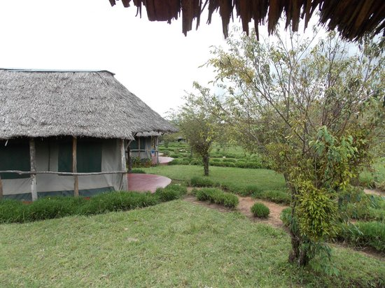Masai Mara Manyatta Camp : from room